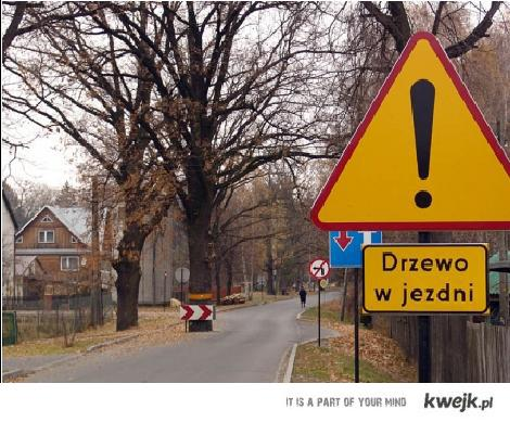 Uwaga drzewo!!!