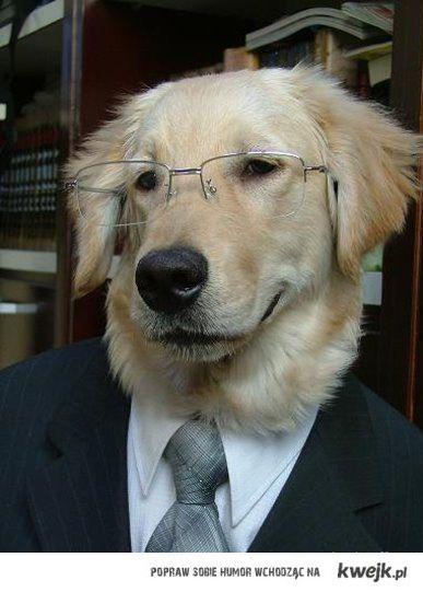 Succesfull Dog