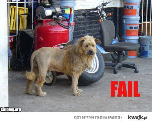 faill