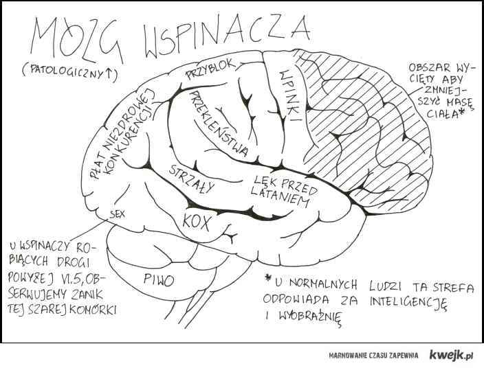 Mózg wspinacza