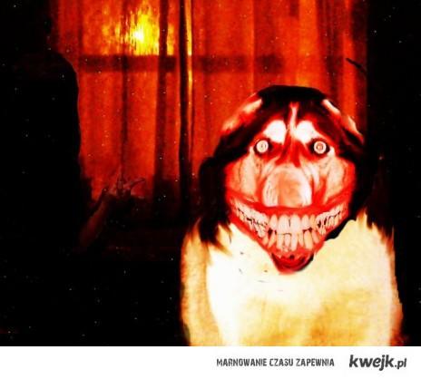Uśmiechnięty pies.