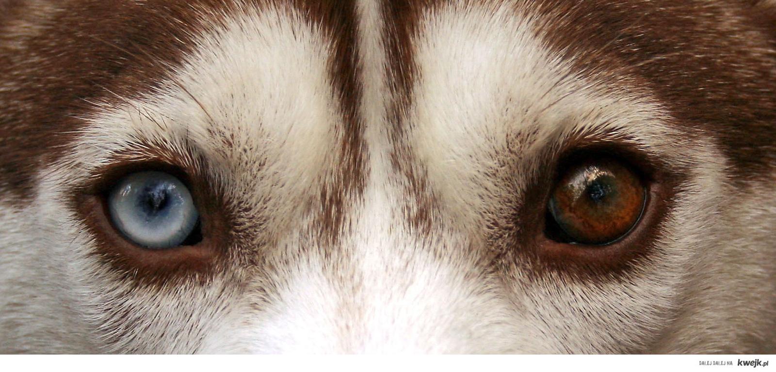 Oczy!