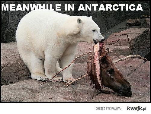 Meanwhile in Antarctica