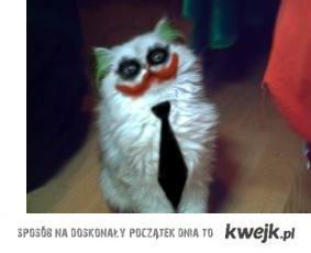 joker-cat
