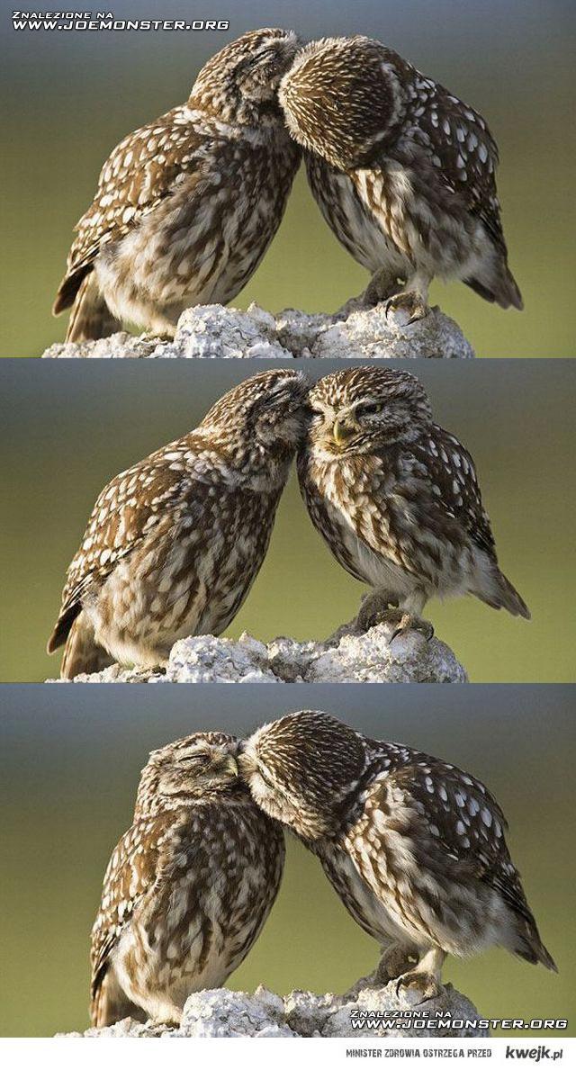 buziak