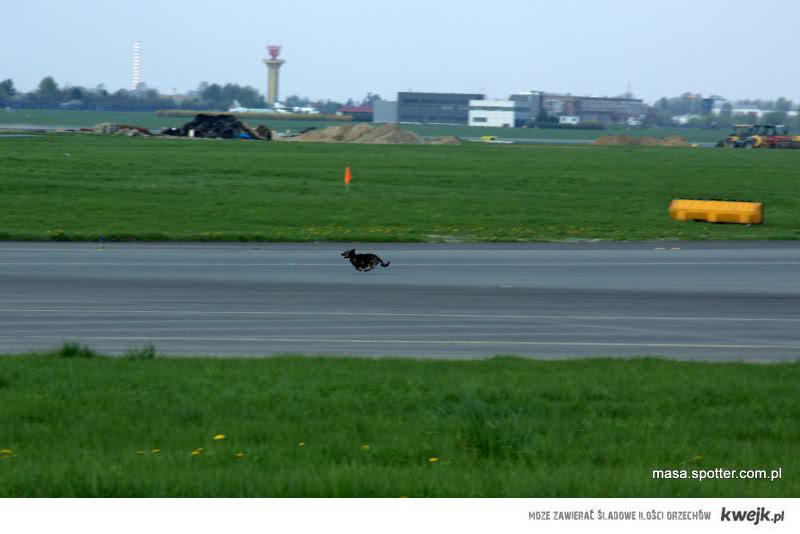 DOG01 Landing EPWA