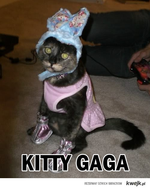 kitty gaga