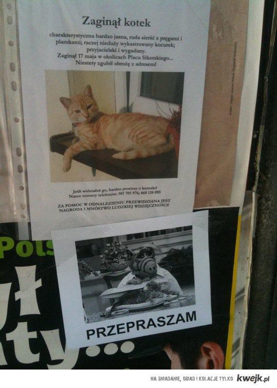 Zaginął kotek :(
