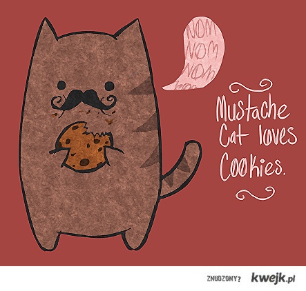 wąsaty kot lubi ciasteczka