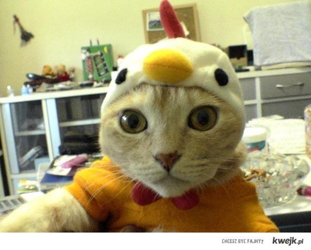 chicken-cat