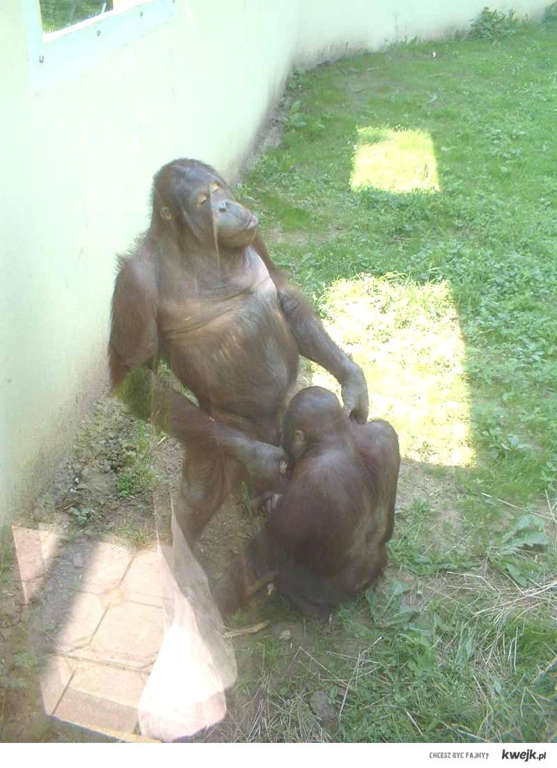 Pewnego słonecznego dnia w zoo... :D