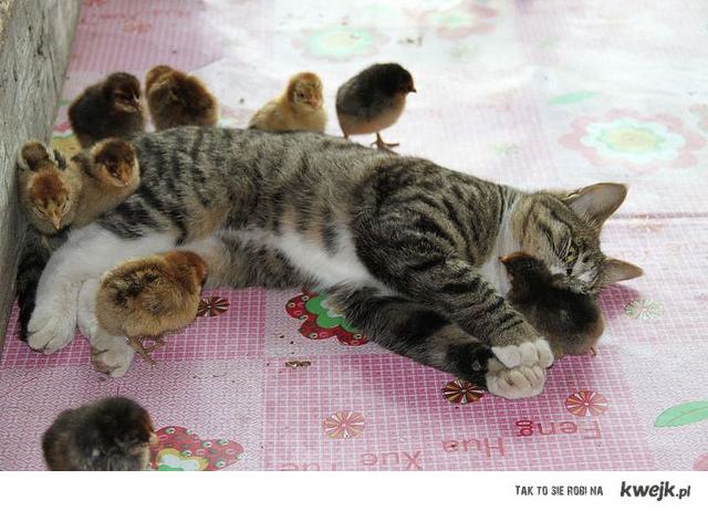 Pussy and chicks