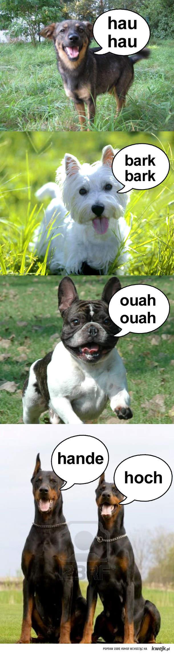 Język psów
