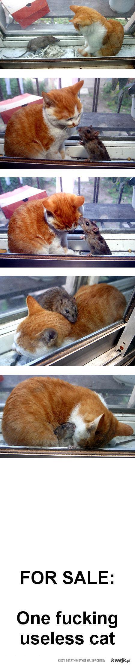 uselesscat