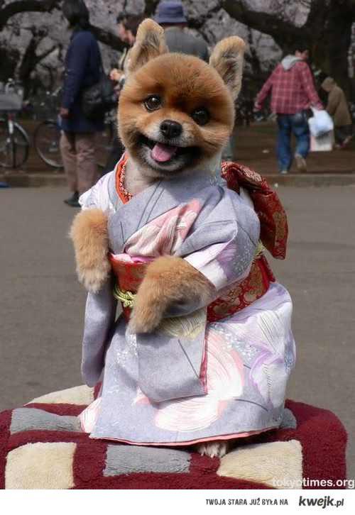 kungfudog