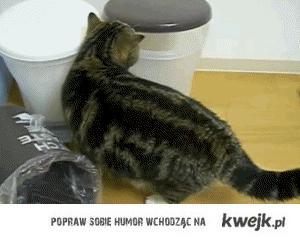 kotftw