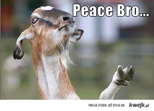 peacebro