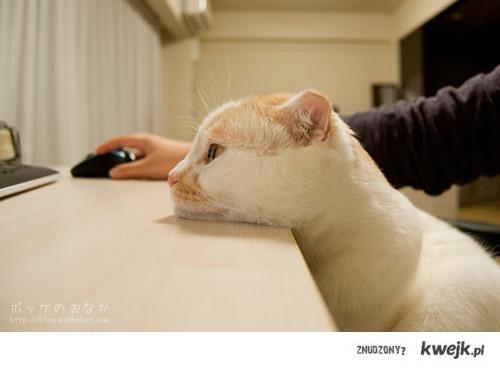 catftw
