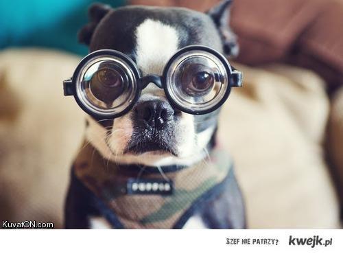 pies w okularach -.-