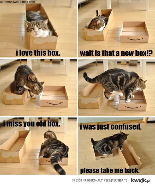 cat and boxes