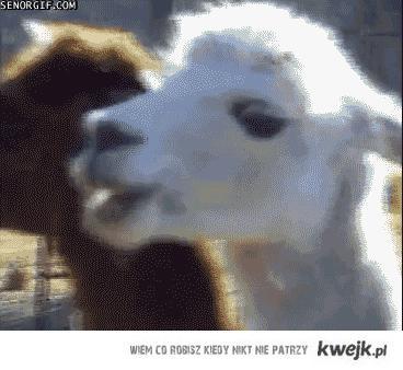 Goat wtf