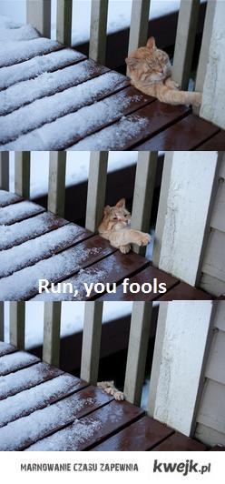 Run fools