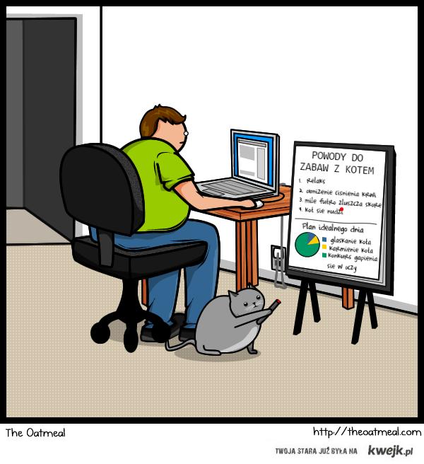 Powody do zabaw z kotem
