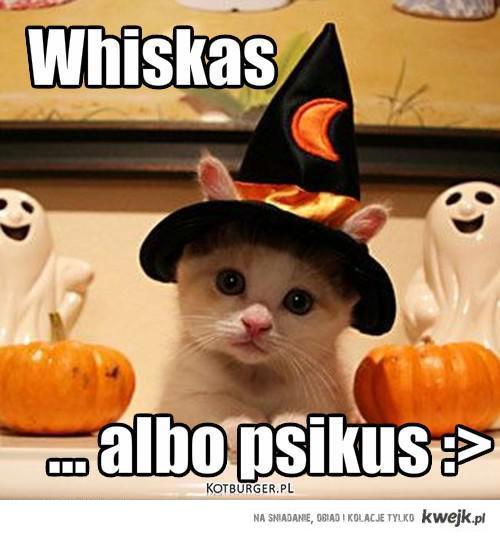 Whiskas albo psikus.