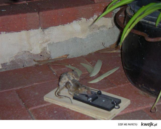 mouse necro