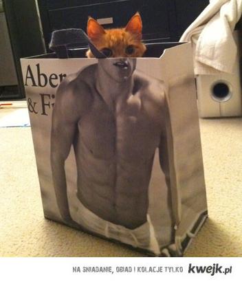 cat in pack