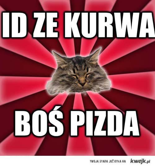 Kot roman mówi: id ze kurwa, boś pizda