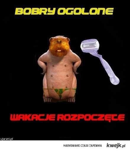 bobry!