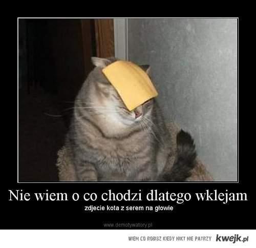 Kot z serem