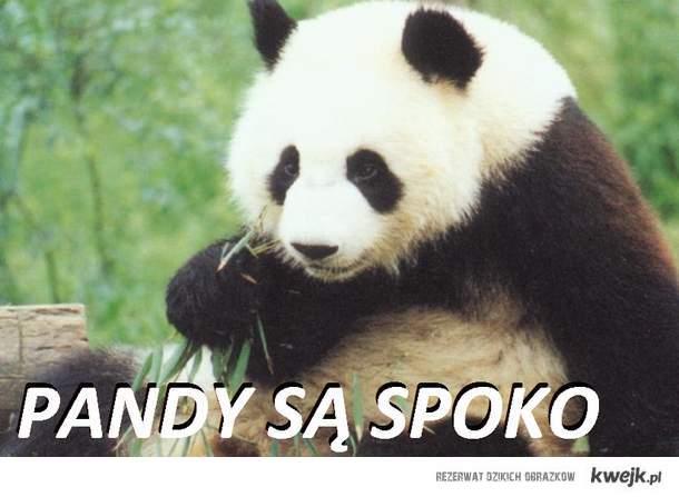 panda > żyrafa