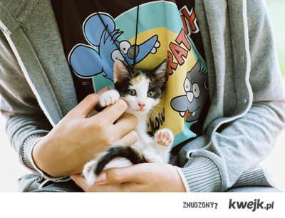 słodki kotek w dłoniach chłopaka . < 3