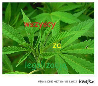 wszyscy za legalizacją