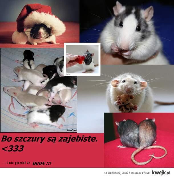 szczurki<333