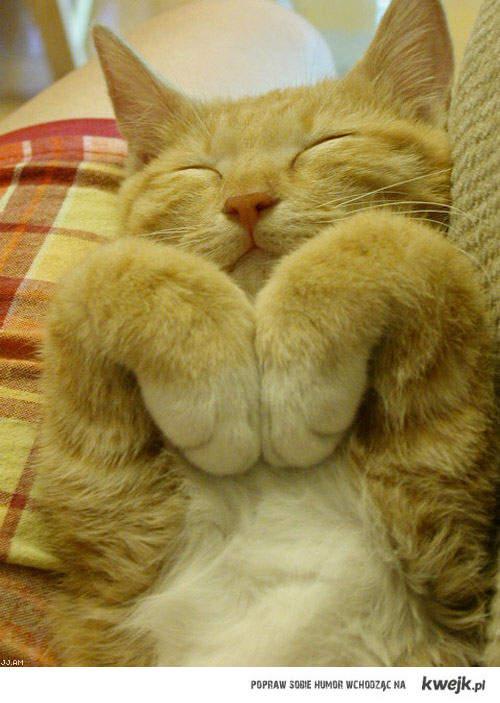 pocieszny kot