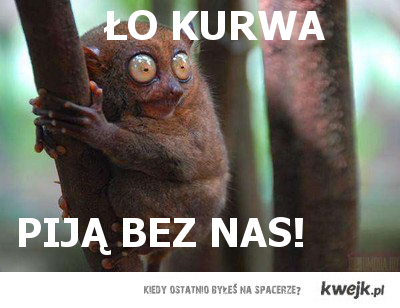 ŁO KURWA