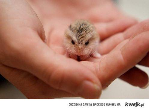 mały ssak
