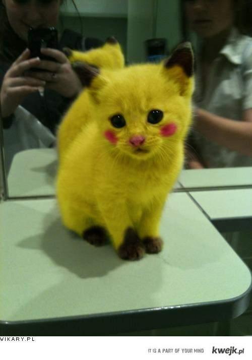 Koto-Pikaczu.