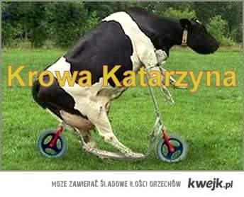 Krowa Katarzyna