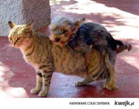 Kocham koty....
