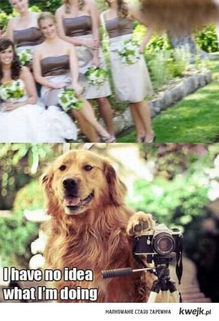 Dog wedding.