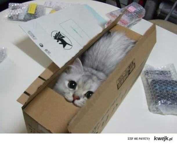 kot w pudelku