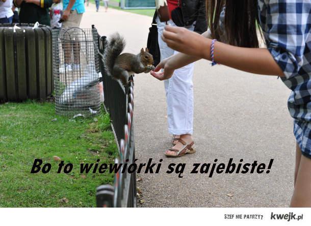 Bo to wiewiórki są zajebiste!