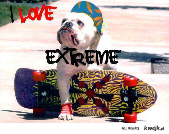 Extreme Dog