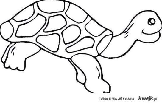 Każdy z nas zna kogoś, kto wygląda jak żółw