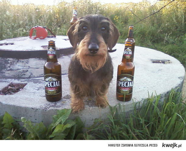 pies wie co dobre