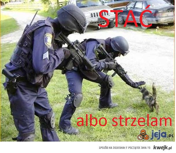 Stać! Policja!